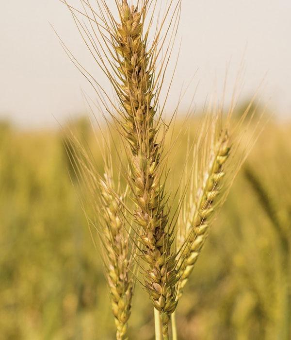 Cereales legumbres y frutos secos